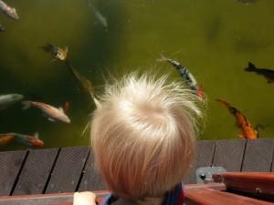 Doramas park - watching fish